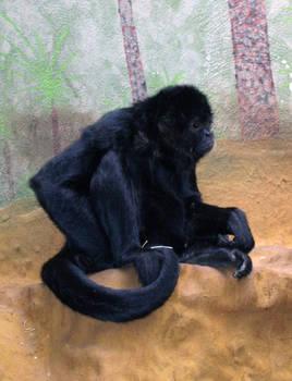 Stock 89 - monkey