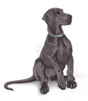 Great Dane Puppy 'blue' by LainDragon