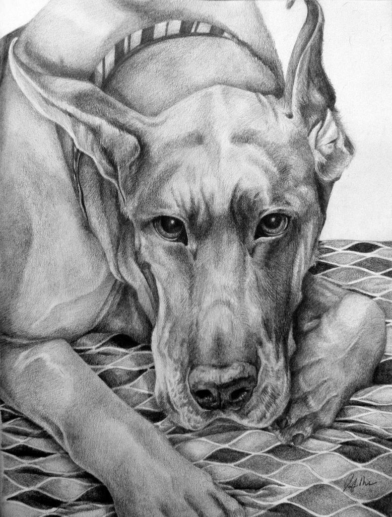 Great Dane by LainDragon