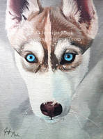 Husky - Winter by LainDragon