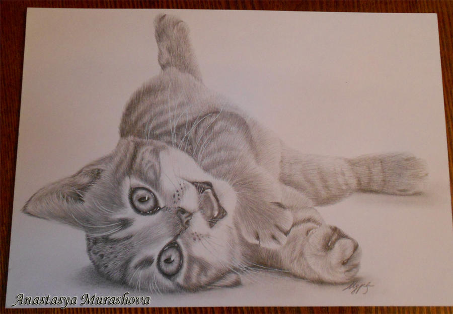 kitten by Anastasya-Murashova