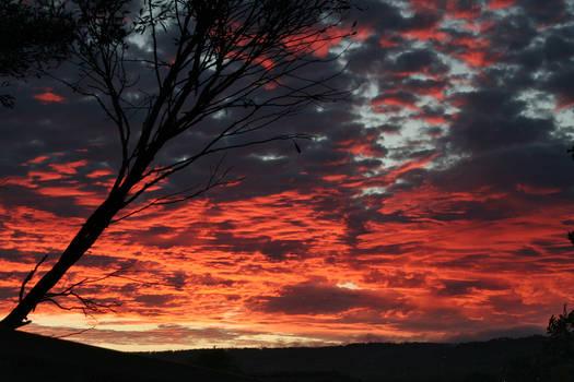 Backyard Sunrise...