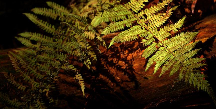 Forest Floor.1 by queenkale
