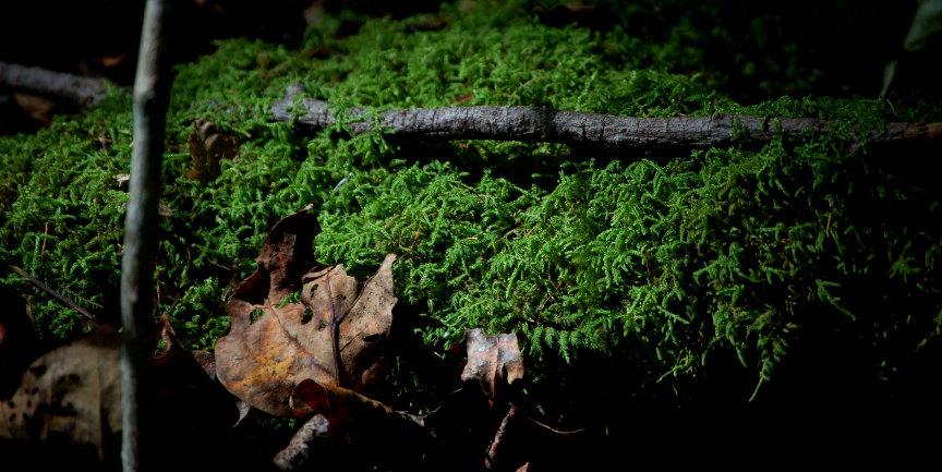 Forest Floor.2 by queenkale
