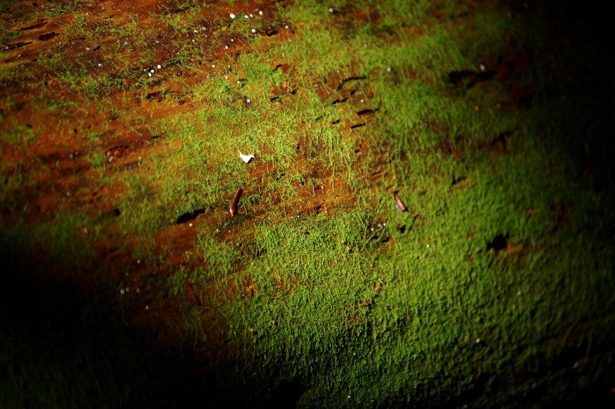 Forest Floor.4 by queenkale