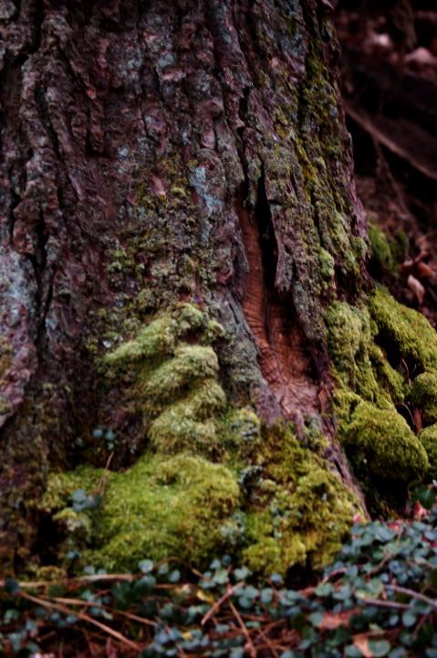 Moss 'n Tree by queenkale