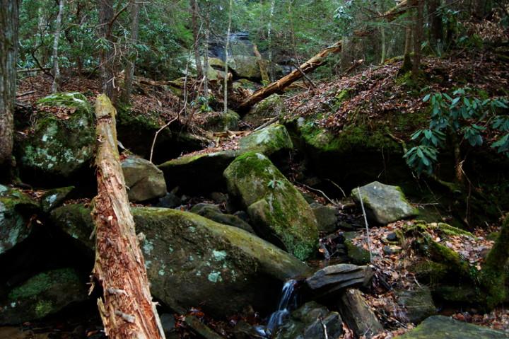 Creek by queenkale