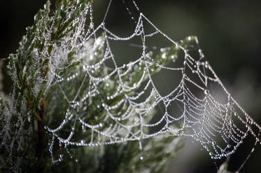 Web by queenkale