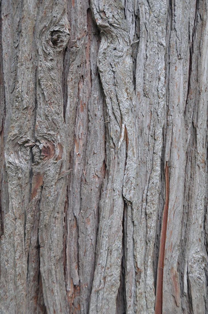 Tree trunk 3 by eddieretelj on deviantart for Tree trunk art