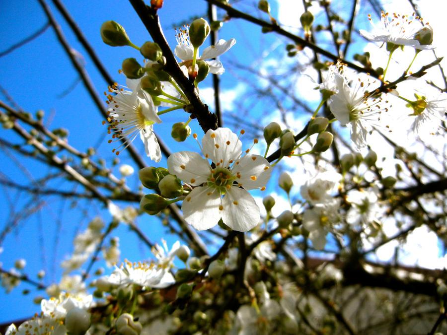 Blossom III by MadeleineAlana