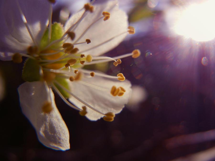 Spring Blossom VII by MadeleineAlana