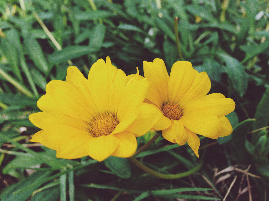 Yellow Flowers by MadeleineAlana