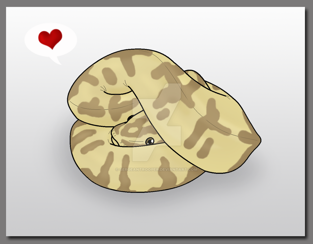 ball python used defense curl by sergeantrooper on deviantart