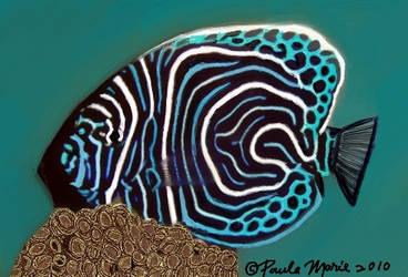 Emperor Angel Fish by youlittlemonkey