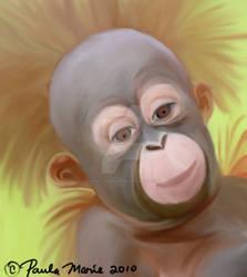 Baby Orangutan by youlittlemonkey