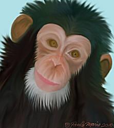 Chimp by youlittlemonkey