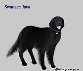 Swansea Jack Rescue Dog by youlittlemonkey