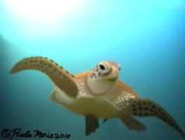 Hawksbill Sea Turtle by youlittlemonkey