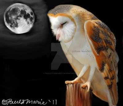 Barn Owl Sleeping by youlittlemonkey