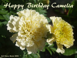Happy Birthday Camelia
