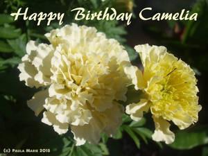 Happy Birthday Camelia