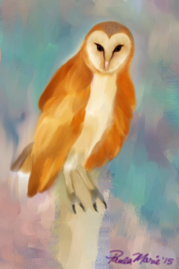 Barn Owl In Water Colors by youlittlemonkey