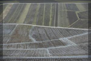Wine fields by hipe-0