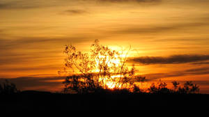 Creosote Sunrise by chell265