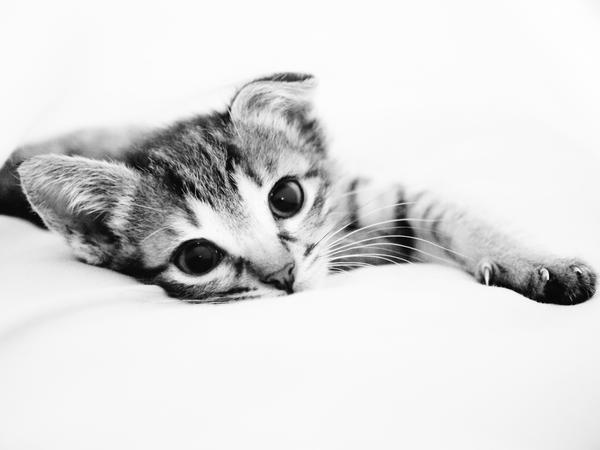 Snuggle_II_by_ismera.jpg
