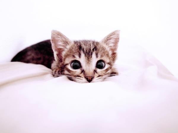 Sweet_kitty_by_ismera.jpg