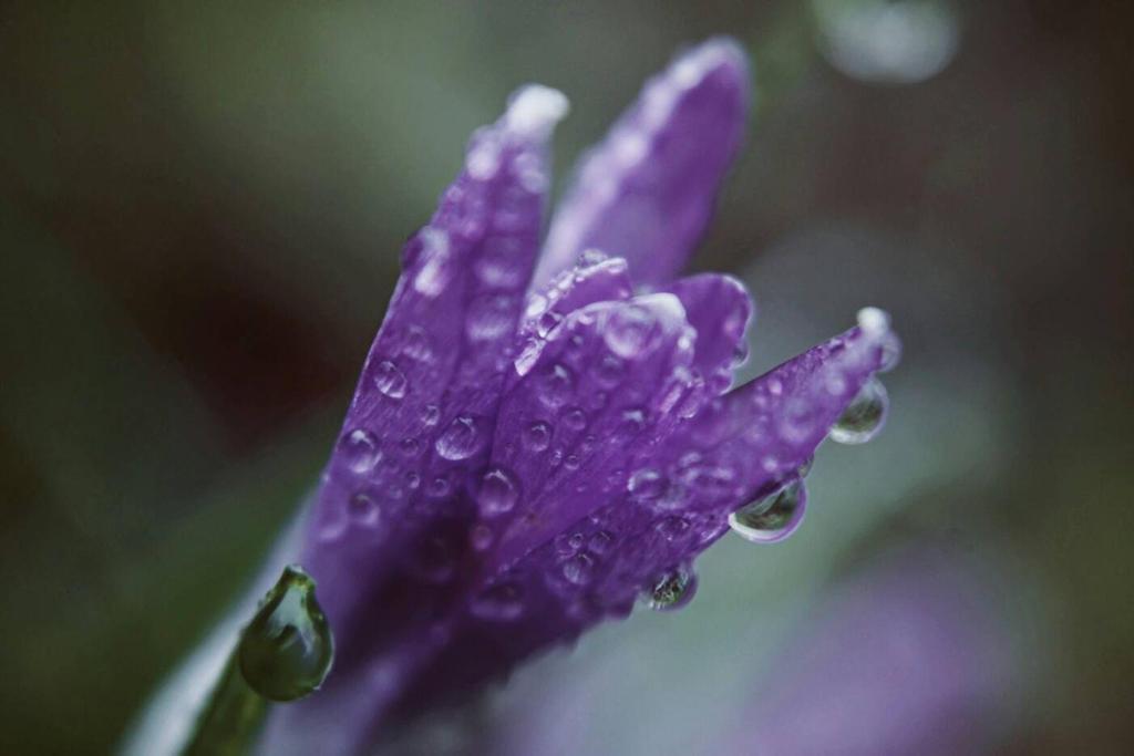 Violet. by allisonx0