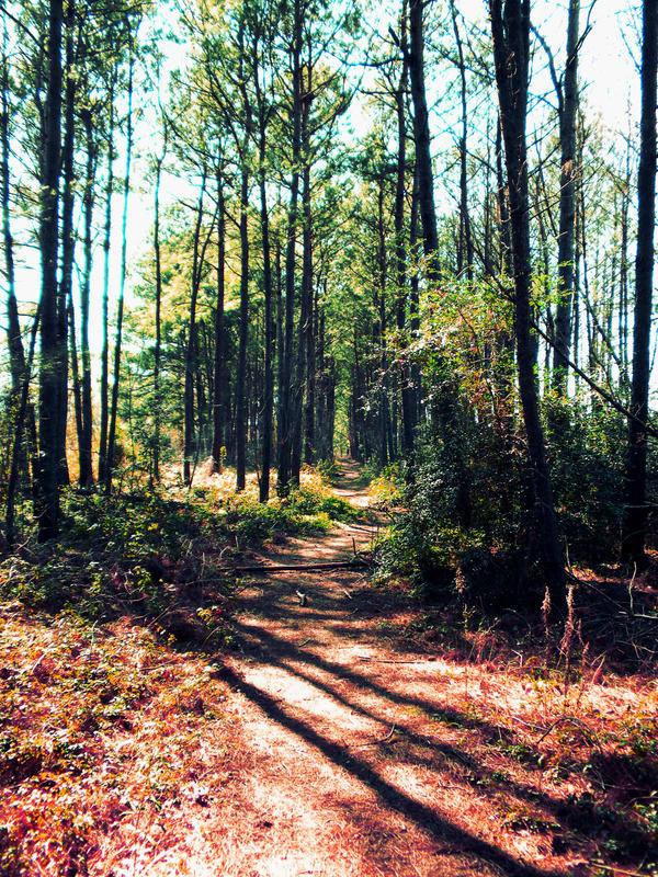 Trail by rzgrc