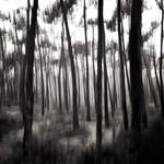 Lost in forest v