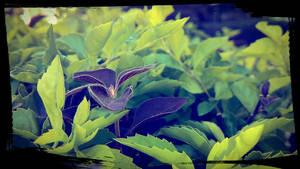 Brown among the greens by suryatejaj