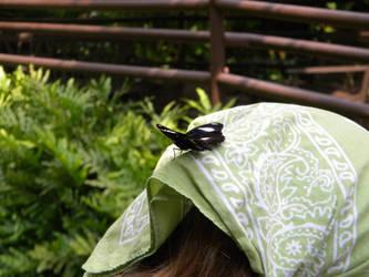 It's on my head?! by NikkiAgent
