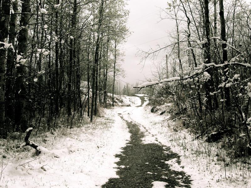 Wonderland Walkway 2