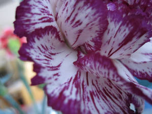 Purple Flower Three