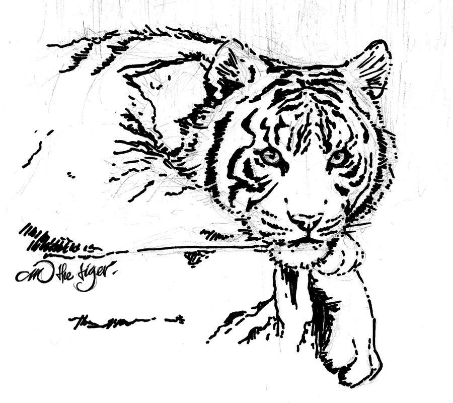 siberian white tiger by arlri jpgWhite Tiger Drawings