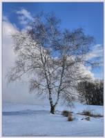 Birch by barcon53
