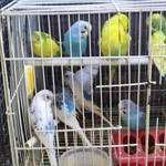 Freedom for parrots) 1