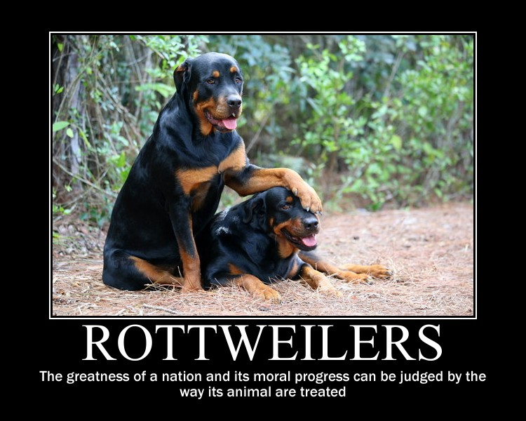 Rottweiler motivational by kitsune2008