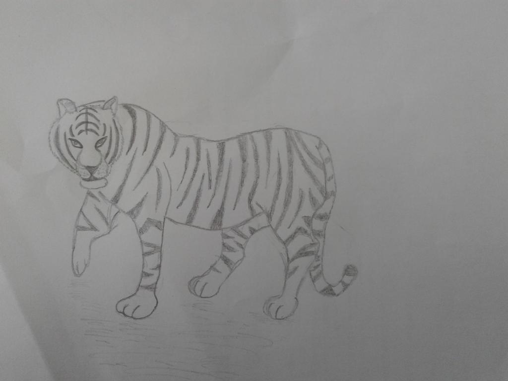 Tigeress by ShadowVanHelsing