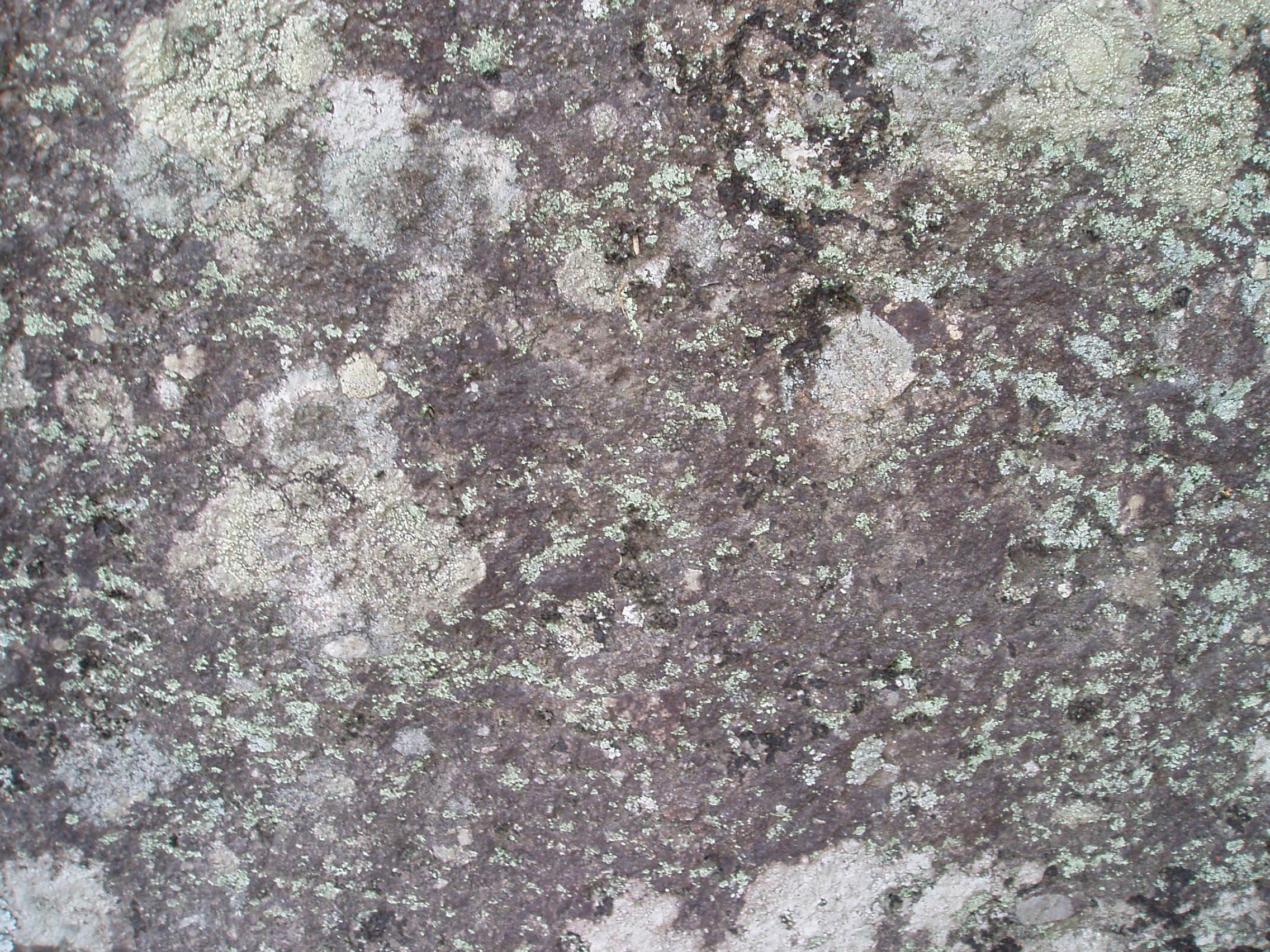 Stock: Lichen rock texture by AntiRetrovirus