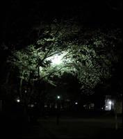 Glowing Cherry Tree by AntiRetrovirus