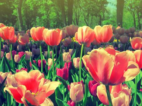 my bright spring
