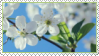 Cherry flowers Stamp by ChuChucolate