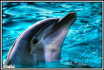 Dolphin - HDR by AfroAfrican