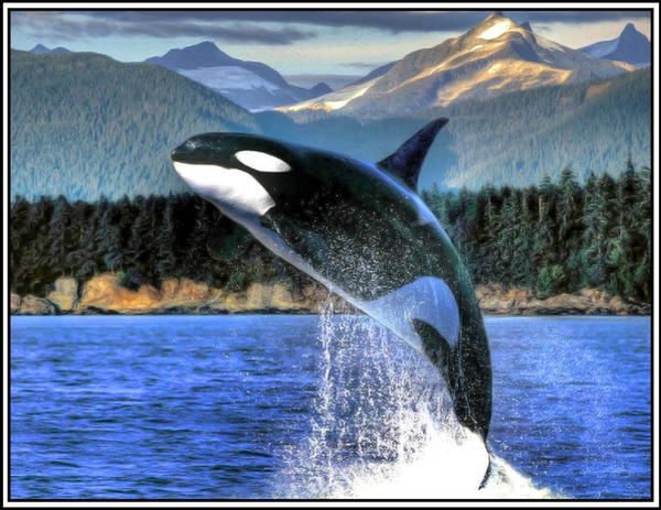 Orca - HDR