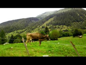 Ticino 14