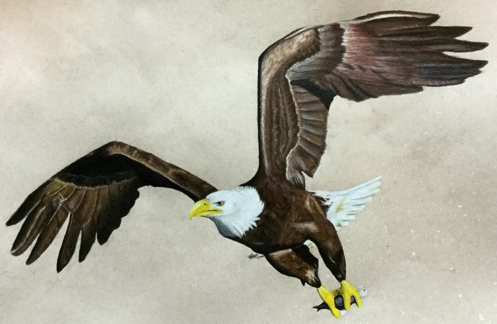 Soar (Color Pencil) by AlphaWolf209x